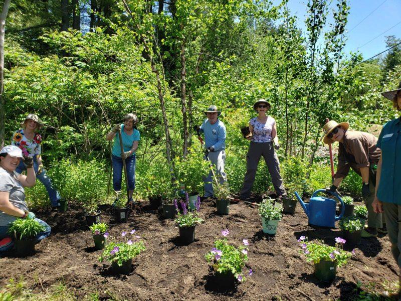 Building a Pollinator Garden